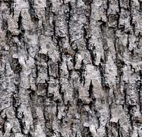 Tree bark 125