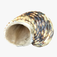 3d seashell sea shell