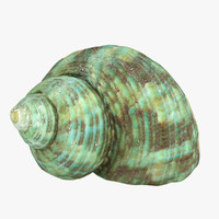 seashell sea shell 3d max