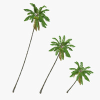 3d coconut palm trees model