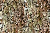 Tree bark 43
