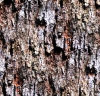Tree bark 45
