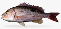 spotted rose snapper 3d fbx