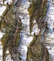 Tree bark 50