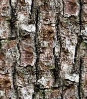 Tree bark 48