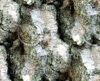 Tree bark 55
