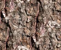 Tree bark 53