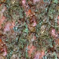 Tree bark 51