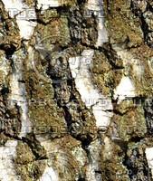 Tree bark 63