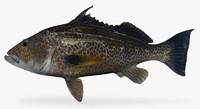 goldspotted sand bass ma