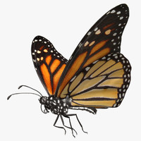 "Danaus Plexippus ""Monarch Butterfly"