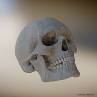 human skull 8k realistic 3d model