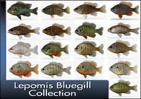 3d model of lepomis bluegil