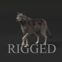 realistic rigged wolf fur hair 3d model
