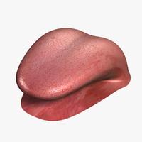 3d human tongue v2 0 model