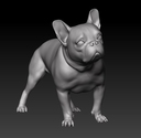 French Bulldog 3D models
