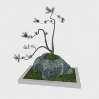 free bonsai pine tree 3d model