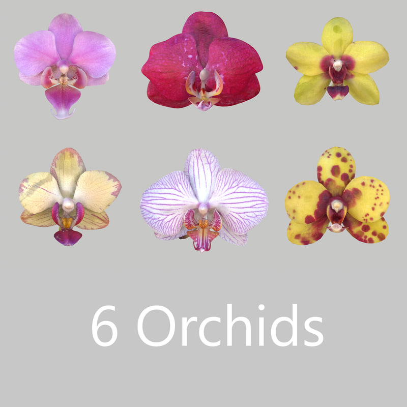 6 Orchids_2.jpg