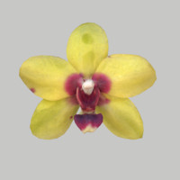 obj orchid flower