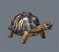 radiated tortoise x