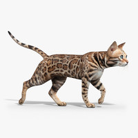 bengal cat animation 3d model