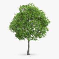 c4d rowan tree 10m