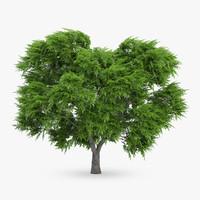 rowan tree 5 7m 3d max