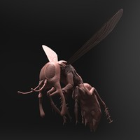 3d model realistic zbrush flying insect