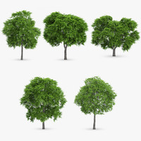 rowan trees 5 3d max