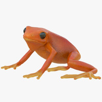 mantella frog rigged animate 3d max