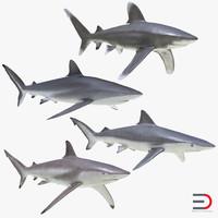 3d model sharks 6
