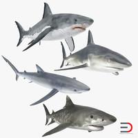 max sharks 3
