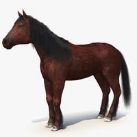 3d model horse fur 2