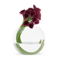 Calla Lilies in Spherical Vase