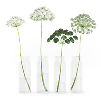 wild carrot flowers glass jars 3d model