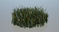 ground grass 3d ma