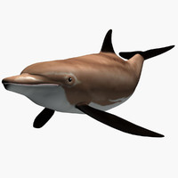 3d model bottlenose dolphine
