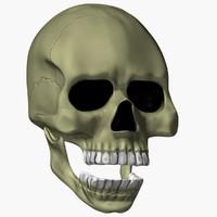 3d animation skull