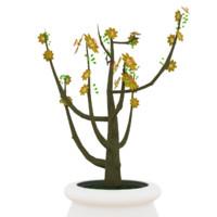 Plum blossom yellow