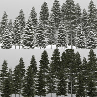 20 picea albea trees 3d max