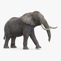 elephant pose 2 3d max
