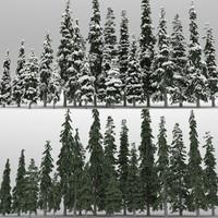 3d max 20 picea engelmanni trees