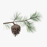 pine tree 01 3d model
