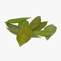 bay leaves max