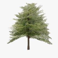 hazel tree 3d max