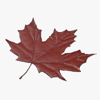3d red maple leaf model