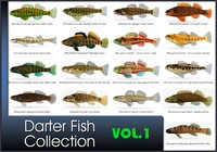 x darter fish