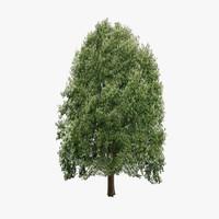 3d model oak tree