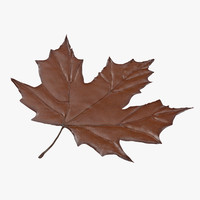 3d model of brown maple leaf