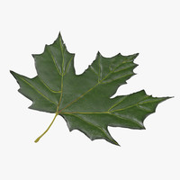 3d model green maple leaf